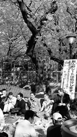 Hanami Ueno Park Merrymaking Tokyo Japan Travel Photography 春 櫻 桜