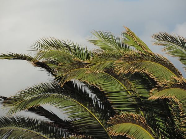 Full Of Life Vacations Beauty In Nature Outdoors Power In Nature Tui Magic Life No People Nature Palm Tree Summertime Landscape Dark Horizon Bad Weather Cloudy Sky