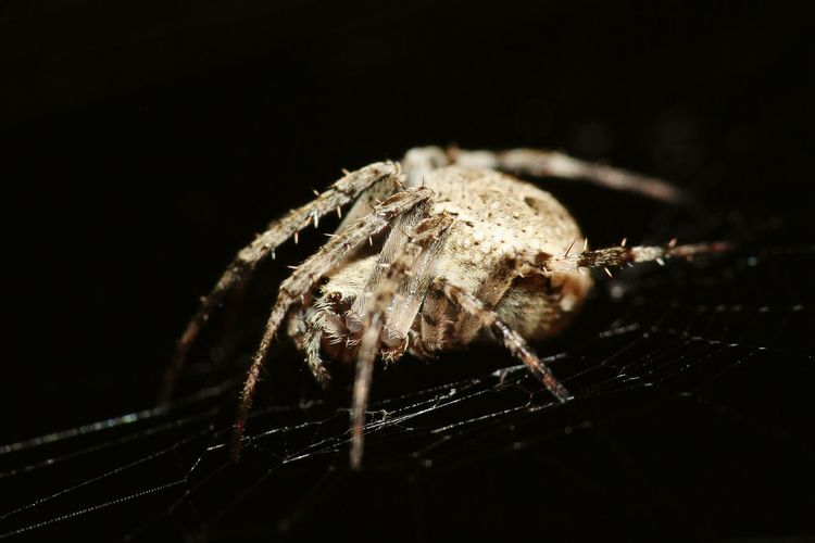 Close-up of spider on web against black background