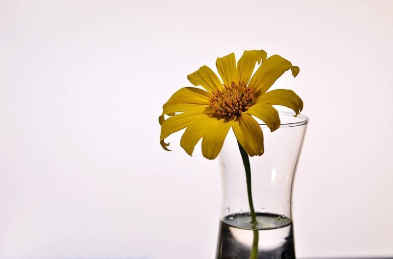 Close-Up Of Vase Against White Background