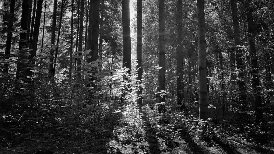 Rainforest Walks Photography Naturephotography Photooftheday Picoftheday Photographer Tree No People Backgrounds Full Frame Day Pattern Nature Forest Winter Outdoors Tranquility Plant Beauty In Nature Land Sunlight Coniferous Tree Cold Temperature Growth