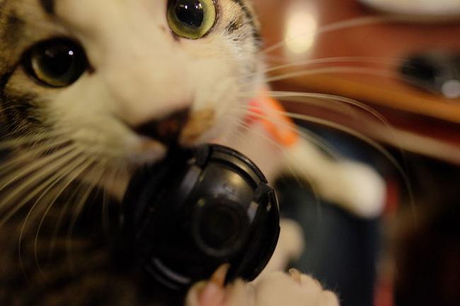 He is naughty😼 Cat Cat♡ Cats Of EyeEm EyeEm Animal Lover Macro Beauty Playing Playtime Frisky Having Fun Fujifilm Fujifilm_xseries XF16mmF1.4 Provia The Purist (no Edit, No Filter) Things I Like