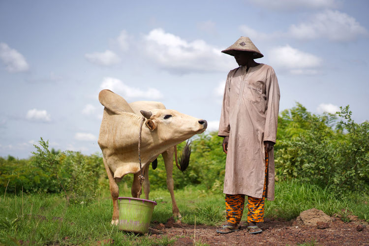 Farmer standing by cow at field