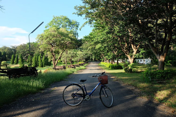 Tree Plant Transportation Bicycle Nature Road Mode Of Transportation Land Vehicle Green Color Day Sunlight Shadow The Way Forward Sky Direction Growth No People Tranquility Outdoors Grass Diminishing Perspective