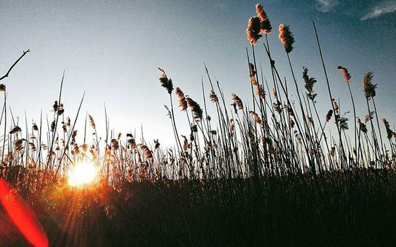 Lens flares. --- Cotuit, MA. VSCO Vscocam Bestofvsco Nature Naturepost Sun Sunset Lensflare Bluesky Sky Cape  Capecod Capecodinsta Capecodinagram Wickedcapecod Capelife Capecodimages Newengland Massachusetts
