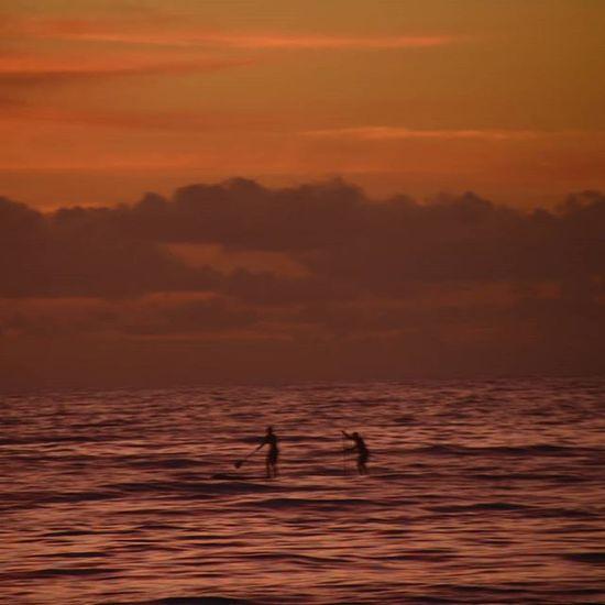 2 paddle boarders at Sunrise Palm Beach Visitsydney Visitnsw Australia Visitaustralia Focusaustralia Australiagram