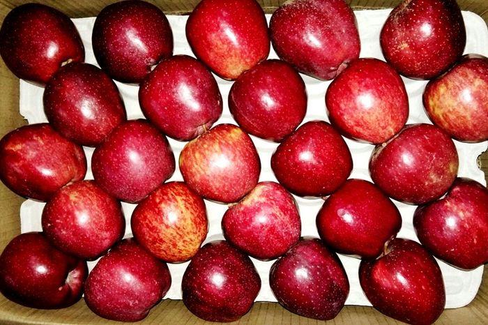 Apple Season Homegrown Apples Apple Picking