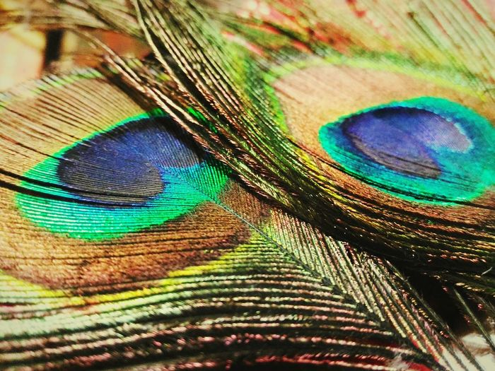 Peacock's feather.. First Eyeem Photo