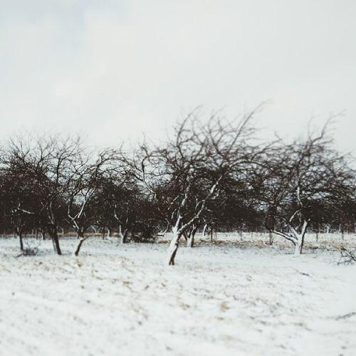 Winterback Bw Monoart_