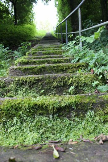 Upwards - Portrait Green Green Color Stair Stairs Moss Grey Color Colors Colorful Up Upwards Taking Photos Macro Macro_collection Macro Photography Close-up Close Up Nature Nature_collection Nature Photography