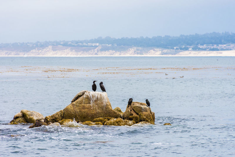 Animal Themes Beach Beauty In Nature Birds Clear Sky Copy Space Horizon Over Water Idyllic Leisure Activity Nature Relaxation Rock - Object Scenics Sea Sky Tranquil Scene Tranquility Water Waterfront
