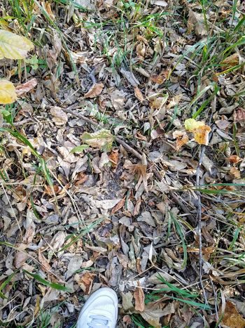 Dead leaves and the dirty ground Personal Perspective Outdoors Decaying Nature Day Leaf Real People Human Leg Beauty In Nature One Person Eye4photography  Samsung Galaxy S7 Edge The Purist (no Edit, No Filter)