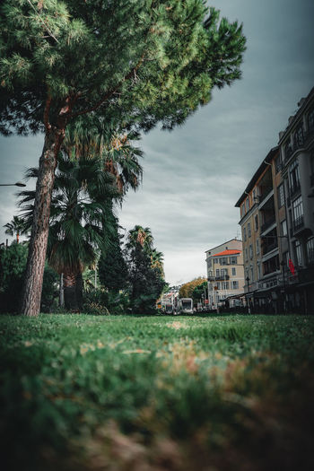 Trees on field by buildings against sky