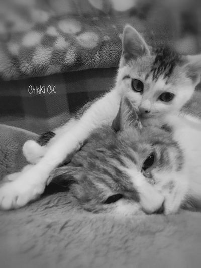 Kitten and Old cat My Cat My Pets Cute Pets Cute Cat.  Cat Cute Cat Blackandwhite Photography Animals Cute Cats Monochrome