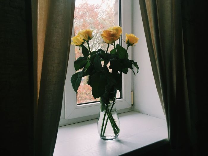 Flower Vase Window Fragility Rose - Flower Indoors  Nature Petal Freshness Flower Head Bouquet Window Sill Flower Arrangement Home Interior Beauty In Nature Curtain Day No People Close-up