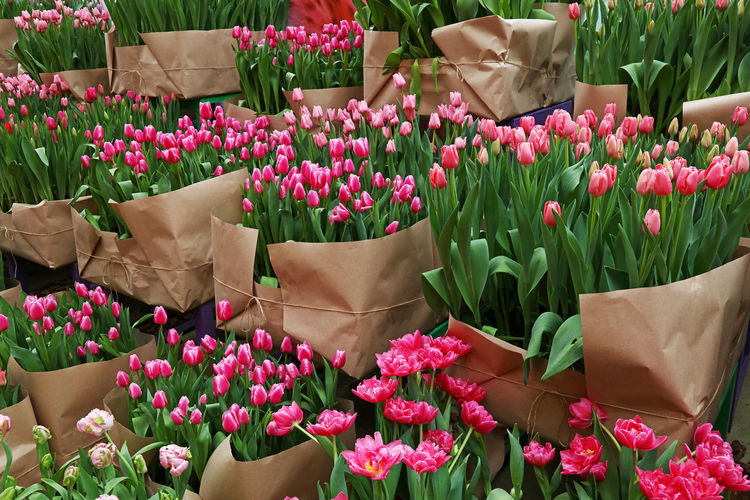 Close-up of pink tulip flowers at market