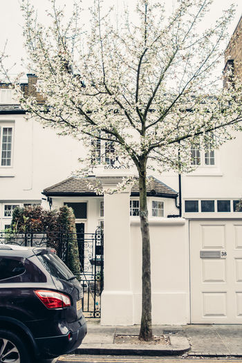 London Notting Hill Spring Tree Architecture Building Exterior Built Structure Street Building Car City Outdoors House White
