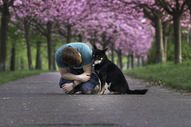 He sometimes still looks shy ^^ Cherry Blossoms EyeEm Selects EyeEmNewHere Love Sakura Shiba Inu Animal Animal Themes Beauty In Nature Blossom Cherry Tree Dog Flower Flowering Plant Hanami Nature One Animal One Person Pets Purple Real People Shibainu Spring Springtime Tree This Is Family