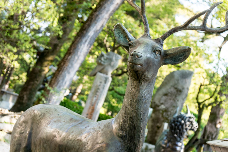 Deer Japan Animal Themes Animals In The Wild Close-up Day Focus On Foreground Looking At Camera Low Angle View Mammal Nature No People One Animal Outdoors Portrait Tree