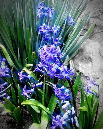 I Love It ❤ Good Day Spring Flowers Spring Ukraine