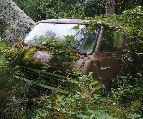 Classic Car EyeEm_abandonment Ford Ford Econoline Overgrown Abandoned Car Day Econoline Land Vehicle Nature No People Outdoors Transportation Van Vans Vintage Cars Vintage Van