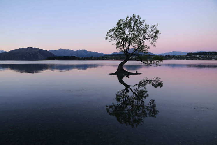 Tree reflected in lake at sunset