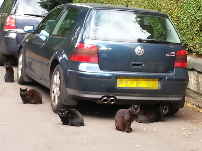 Black Magic Security... no job too small. Cats Superstition  Black Cat Coincidence Random