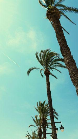 🌞🌴 Sunshine Sitges Barcelona España Palmeras PalmsTrees Playa Beach Day Bluesky Pornsky  Chill Good Times Relaxing Enjoying Life Showcase June