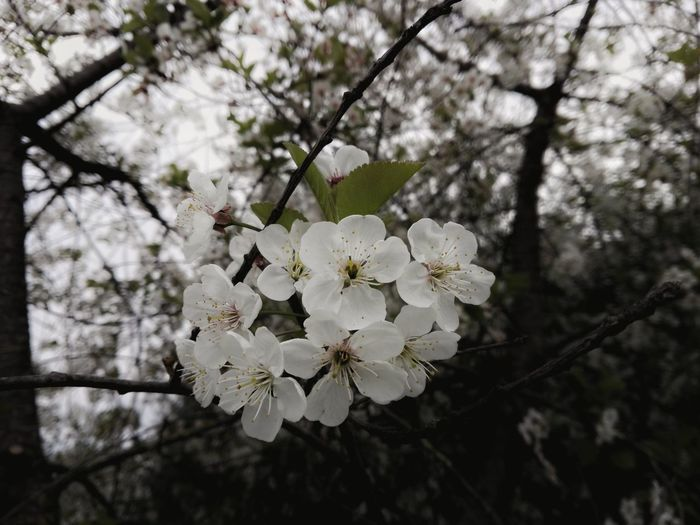 To my love Growth Tree Nature Branch Flower Beauty In Nature Twig Blossom Petal Springtime Fragility Freshness No People Close-up Flower Head Outdoors Almond Tree Plum Blossom Day Resist EyeEm Diversity The Secret Spaces Long Goodbye Art Is Everywhere