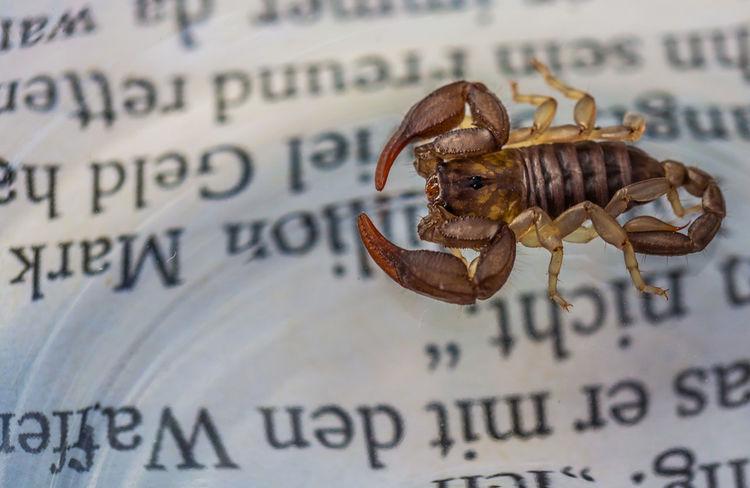 Animal Animal Themes Arachnida Arthropoda Chelicerata Close-up Communication Day Jar Macro Magazine Nature No People Scorpion Text