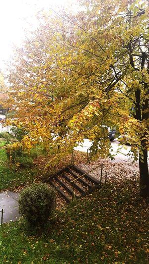 Autumn Love 😍