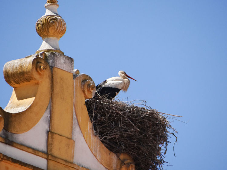 Architecture Bird Clear Sky Low Angle View Old Building  Stork Stork's Nest Typical Portuguese Architecture Yellow And White Building