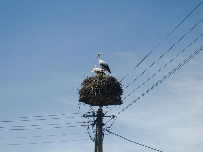 Stork Storks Storks Couple Storks Nest Stork's Nest Storchennest Störche Storchenpaar Animal Animals Animals In The Wild Animal Photography Bird Photography Bird Birds Birds Of EyeEm  Blue Sky Pregnancy Happy Happiness Fine Art Photography Showcase July Two Is Better Than One Adapted To The City