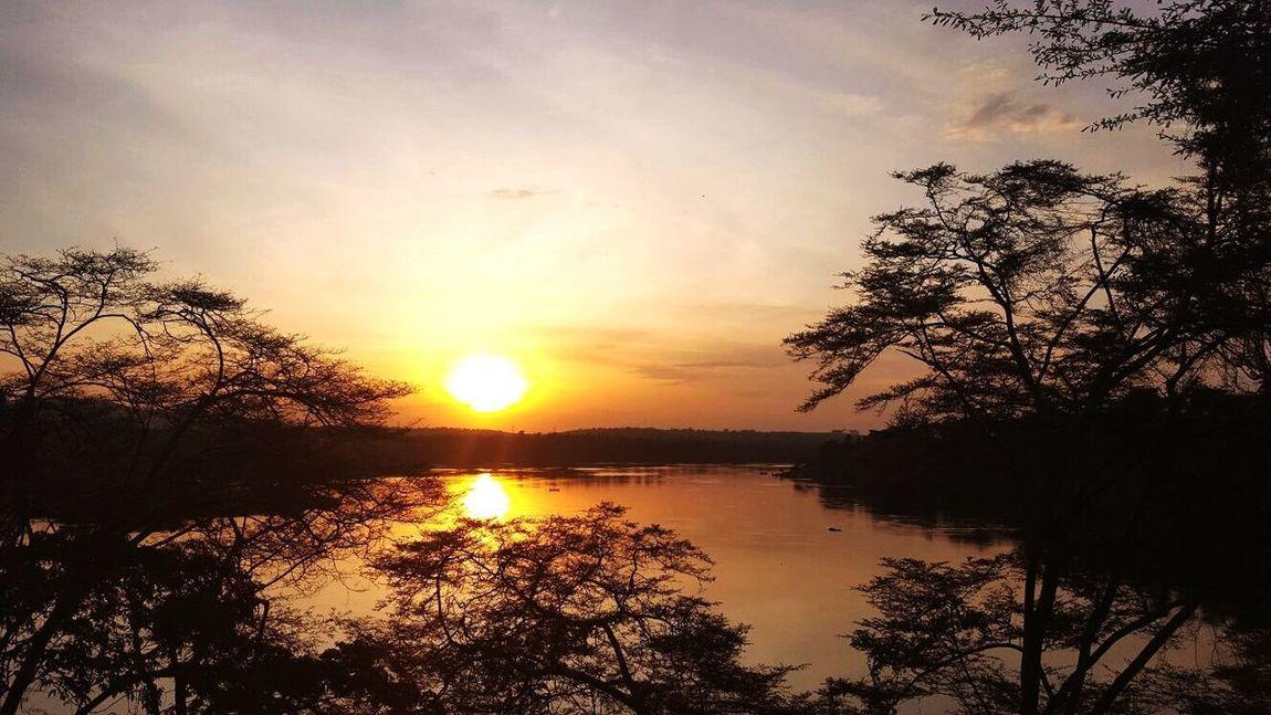 Uganda  Sunset Tree Silhouette Beauty In Nature Tranquil Scene Nature Sky