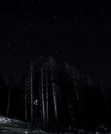 Night light in the woods Night Lights Nightphotography Blackandwhite EyeEm Best Shots - Black + White Black And White Black & White EyeEm Nature Lover Eye Em Nature Lover Bnw_friday_eyeemchallenge EyeEm Gallery