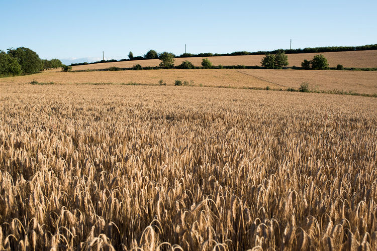 Gold Harvest Harvest Time Harvesting Hills Landscape Landscapes Natural Beauty Nature Summer Summer Vibes Sun Sunny Sunny Day Wheat Breathing Space Investing In Quality Of Life Crafted Beauty