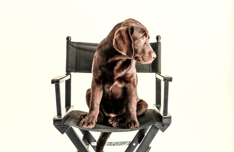 Dog sitting on chair against white background