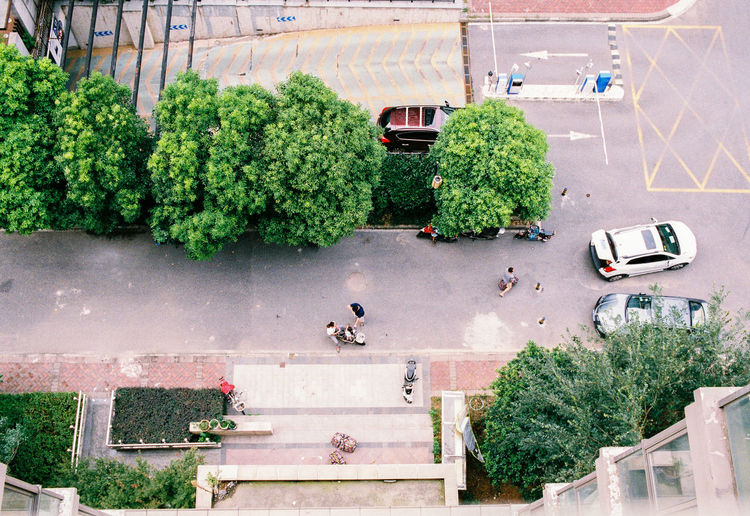 High Angle View Of Plants And Cars On Road