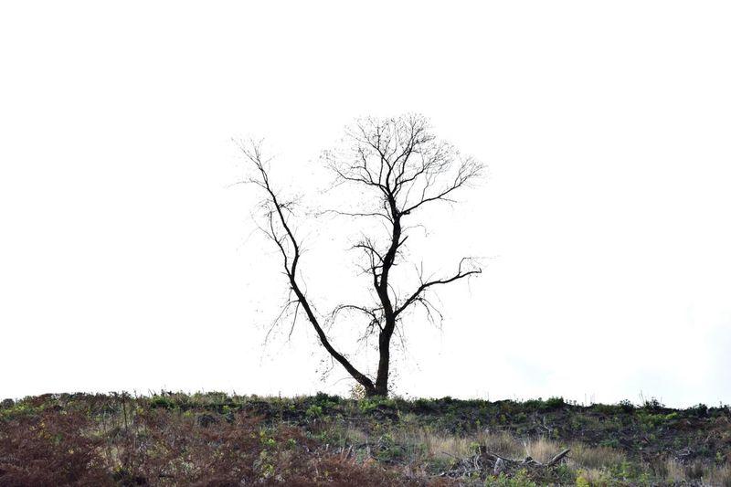 Landscape Photography Outdoors On Location Taking Photos Bare Tree Tree Nature Isolation Canoc Chase
