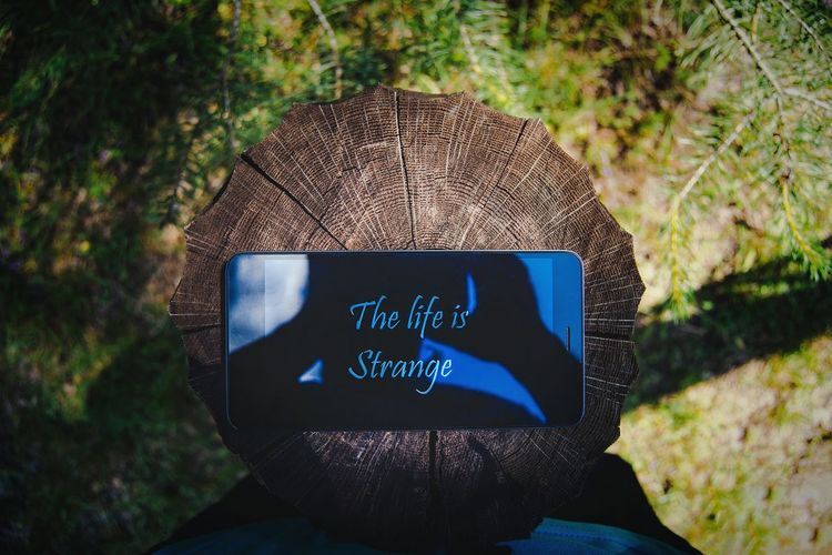 The life is strange Stange Life In Forest Great Outdoors Outdoors Nature Eyeem Photo Lifestyle From My Point Of View By Ivan Maximov View Of Nature My Freedom Belarus Nature Freshness Center Technology Human Meets Technology Inscription BYOPaper!