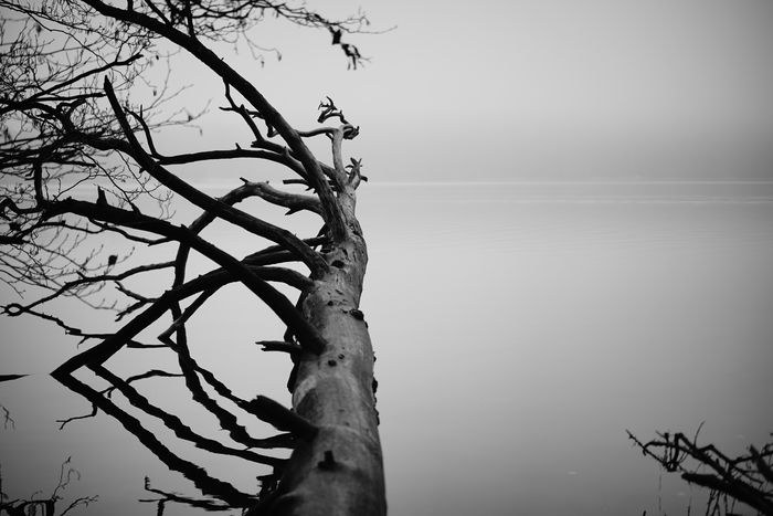 Calm mind Blackandwhite Reflection Lake Lake View Sky Tree Plant Branch Nature Tranquility Beauty In Nature Water Trunk Tree Trunk Outdoors No People