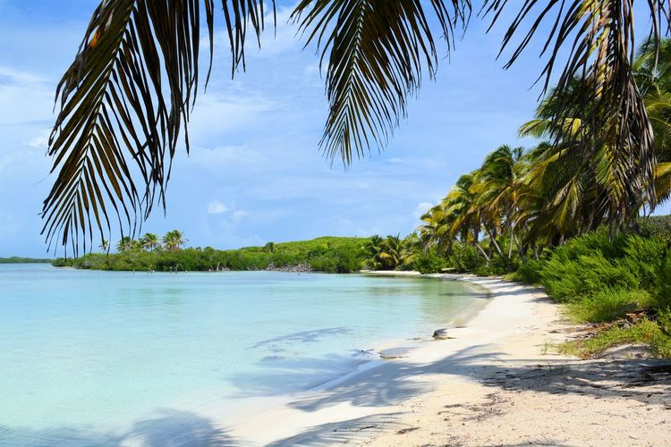 Beach Beauty In Nature Blue Branch Calm Cloud Cloud - Sky Coastline Green Color Growth Nature Non-urban Scene Palm Leaf Palm Tree Sand Scenics Sea Shore Sky Tranquil Scene Tranquility Tree Tropical Climate Vacations Water