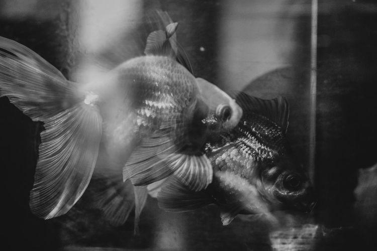 Animal Animals In The Wild Animal Themes Animal Wildlife Sea Vertebrate Transparent Animals In Captivity Water Group Of Animals Glass - Material Swimming Underwater Indoors  Fish Motion No People Nature Aquarium Marine