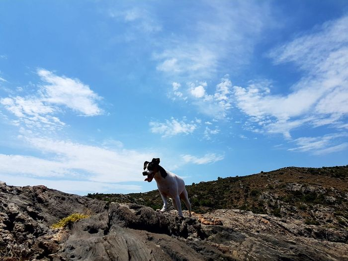 Grito de libertad. Dog Animal Themes Nature One Animal Domestic Animals Nature Lifestyles