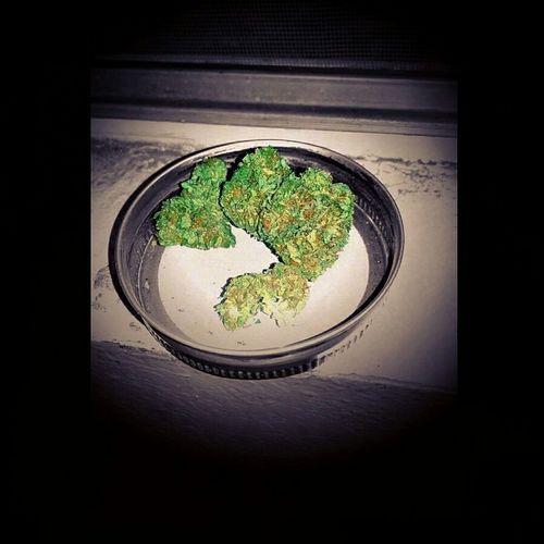 MJs photo shoot Taking Photos Relaxing Herb Green Art & Marijuana Marijuana 💚