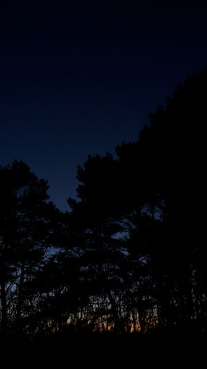 Night Tree Dark Pine Tree Forest Silhouette Nature No People Constellation Outdoors Beauty In Nature Sky Love Night Mobile Photography Samsungphotography No Filter, No Edit, Just Photography Orginal Photograph