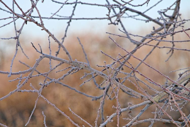 Focus On Foreground Plant Nature Cold Temperature Close-up Branch Tree Winter Selective Focus Beauty In Nature Bare Tree Twig Beautiful Nature Natural Beauty Frosty Frosty Mornings Wintertime Nature_collection Lovely Nature Photography Naturelovers Scenics - Nature EyeEm Nature Lover Beautiful Winter Trees