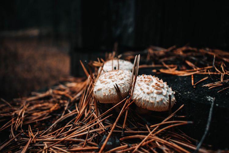 Close-up of dried mushroom on field