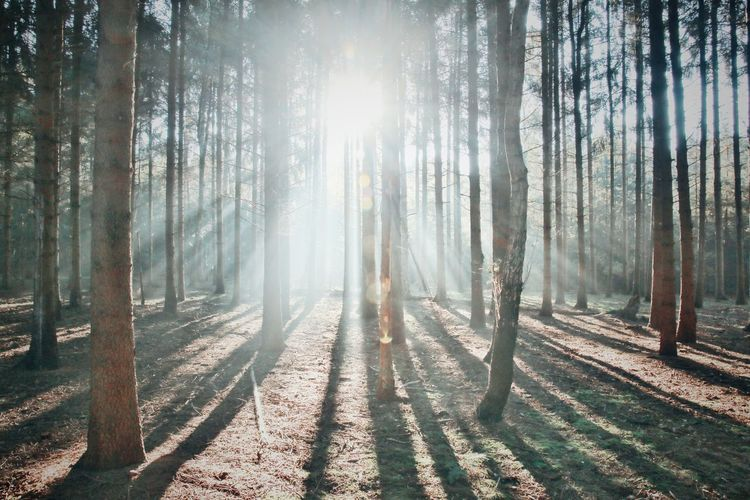 Good sunday all! Tree Trunk Forest Sunlight Tree WoodLand Shadow Nature Tranquil Scene Beauty In Nature Scenics Sun Outdoors Naturelovers Natureporn Nature Photography Streamzoofamily EyeEm Gallery Eyemphotography Tree Area Nature Nature_collection Sunbeam