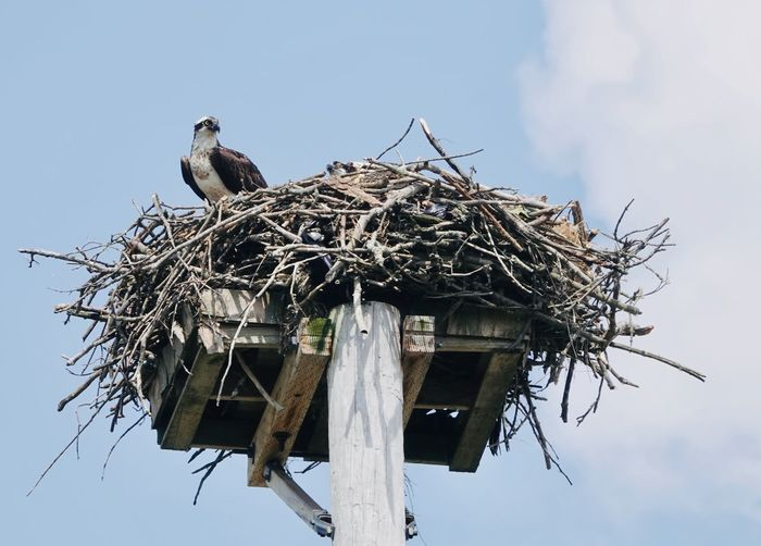 Low angle view of bird perching on nest against sky